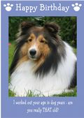 "Shetland Sheepdog-Happy Birthday - ""Are You Really THAT Old"" Theme"